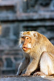 Monkeys in temple. Indonesia. Stock Images