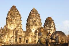 Monkeys in temple Phra Prang Sam Yot Royalty Free Stock Image