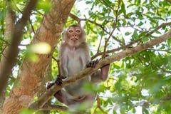 Monkeys of Thailand stock image