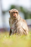 Monkeys of Thailand stock photos