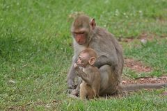 Monkey. S in Thailand Stock Photography