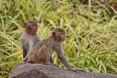 Monkey. S in Thailand Stock Image