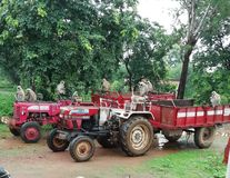 Monkeys on tractor royalty free stock images