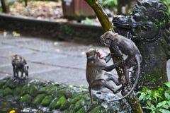 Monkeys on the tree Stock Photography