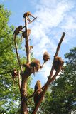 Monkeys on a tree. Several brown monkeys sitting on a tree Stock Image