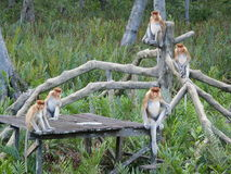 Monkeys on the tree Royalty Free Stock Photography