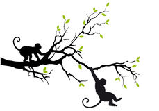Monkeys on tree, vector. Monkey hanging on tree branch, vector background Stock Image
