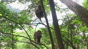 Monkeys in the trees in the jungle. To the sea stock footage