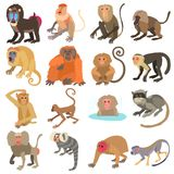 Monkeys types icons set, cartoon style. Monkeys types icons set. Cartoon illustration of 16 monkeys types vector icons for web Stock Illustration