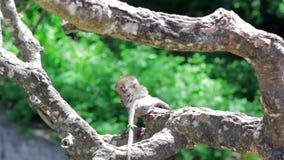 Monkeys in uluwatu temple, bali stock footage