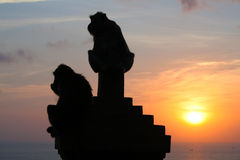 Monkeys at Uluwatu temple, Bali Indonesia. Silhouette monkeys at Uluwatu temple, Bali Indonesia Stock Photo