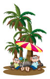 Monkeys under the coconut trees Royalty Free Stock Images