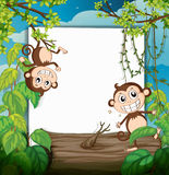 Monkeys and white board Royalty Free Stock Images