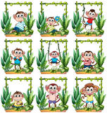 Monkeys in the wooden frame Royalty Free Stock Image