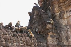 monkeys yod sam prang phra Стоковая Фотография RF