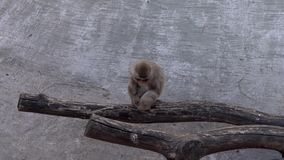 Monkeys in the zoo. Warm summer day stock video