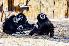 Monkeys in zoo Stock Photo