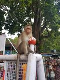 Monkeyy stock photo