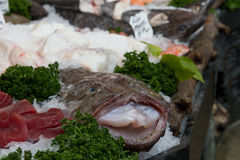 Monkfish at fishmarket. A monkfish at a fishmarket covered in ice stock photography