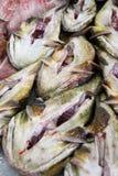 Monkfish at market Stock Photo
