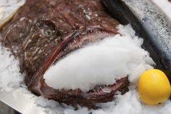 Monkfish on market display Royalty Free Stock Images