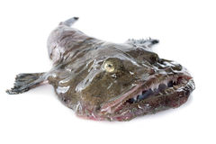 Monkfish Royalty Free Stock Image
