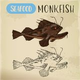 Monkfish or sea-devil, fishing-frog or fish sketch. Sketch of monkfish or fishing-frog, sea-devil or angelshark. Hand drawn fish for signboard. Sport fishing and Royalty Free Stock Images