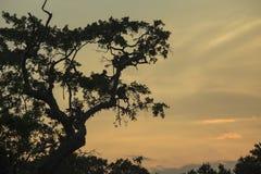 Monkies в дереве Стоковое Изображение RF