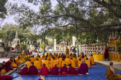 Monks under the bodhi tree Royalty Free Stock Photos