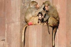 Monky family Stock Photo