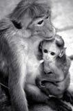 monky moeder en shes baby Stock Afbeeldingen