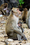 Monky mom with baby Stock Photo