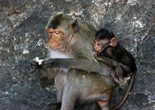 Monky-Mutter mit Baby Lizenzfreie Stockfotos