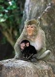 Monky-Mutter mit Baby Lizenzfreie Stockbilder