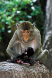 Monky-Mutter mit Baby Lizenzfreies Stockfoto