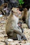 Monky-Mutter mit Baby Stockfoto