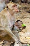 Monky-Mutter mit Baby Stockfotos