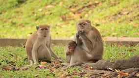 Monky sztuka w lesie zdjęcie wideo