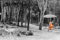 Monnik die dagelijkse het schoonmaken routine doen bij in Tiger Temple in Kanchanaburi, Thailand Stock Foto