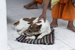 Monnik die een hond in een pagode in Luang Prabang strijken royalty-vrije stock fotografie