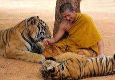 Monnik met tijgers stock foto's