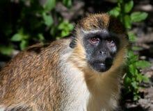 Mono. imagenes de archivo