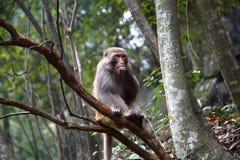 mono foto de archivo libre de regalías