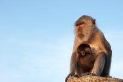 Mono imágenes de archivo libres de regalías