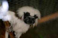 Mono africano Imágenes de archivo libres de regalías