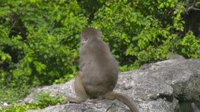 Mono ascendente cercano de la madre con el bebé en selva verde del bosque Familia de monos con los cachorros jovenes en reserva n almacen de metraje de vídeo