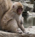 Mono asentado de la nieve del bebé Fotos de archivo libres de regalías