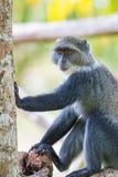 Mono azul imagen de archivo