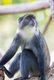 Mono azul imágenes de archivo libres de regalías