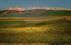 Mono bacino, montagne Snow-Capped, California Fotografia Stock Libera da Diritti